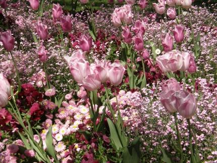 Blumenbilder